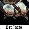 discover bat facts