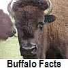 see buffalo facts/bison facts