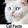 discover cat facts