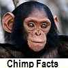 discover chimp facts
