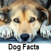 discover dog facts
