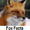 check out fox facts