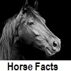 explore horse facts