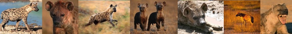 Hyena film strip