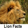 discover lion facts