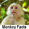 go to monkey facts