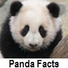 discover panda facts