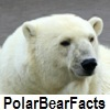 see polar bear facts