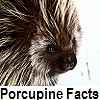 go to porcupine facts