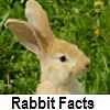 see rabbit facts
