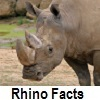 see rhinocerus facts