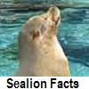 explore sealion facts