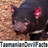 see Tasmanian devil facts
