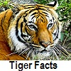 explore tiger facts
