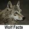go to wolf facts