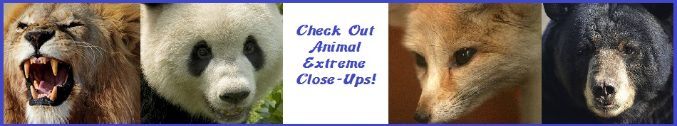 go to animal extreme close-ups!