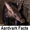 see aardvark facts