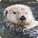 otter facts