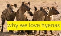 hyena facts