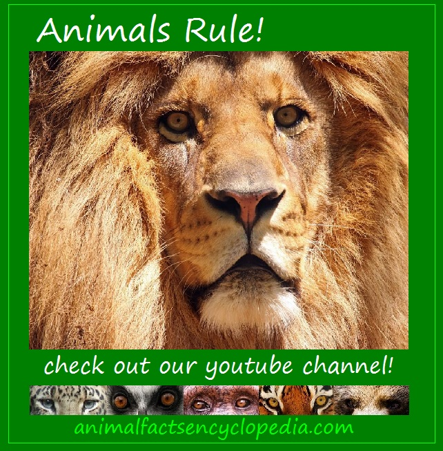 animals rule