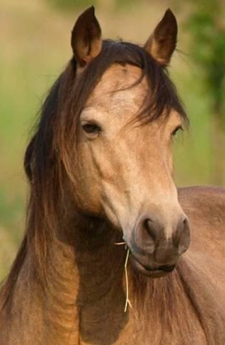 Mustang portrait