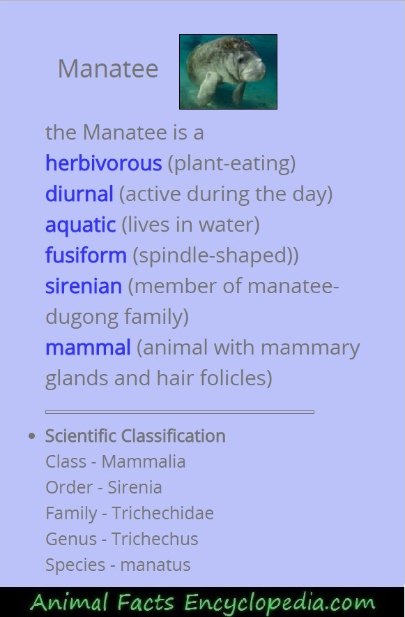 manatee science