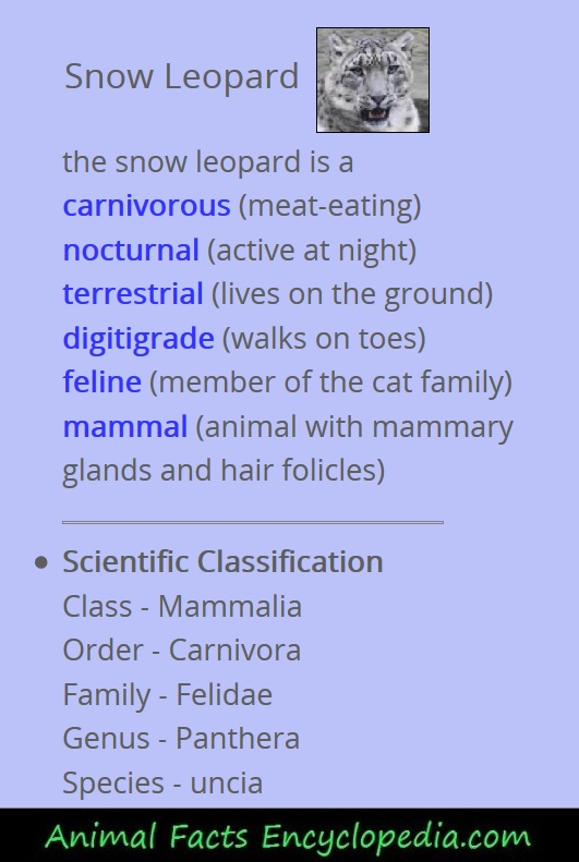 giraffe animal stats