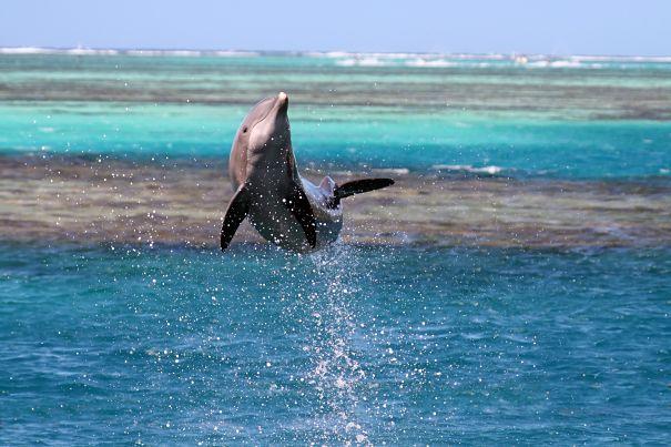 dolphin airborne