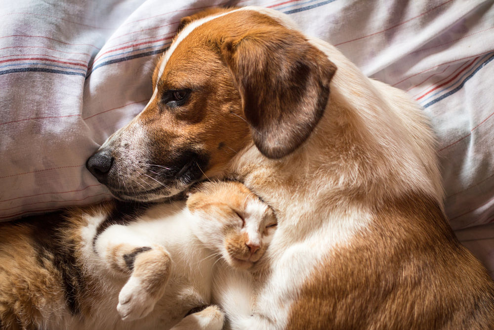 dog and kitty snuggle