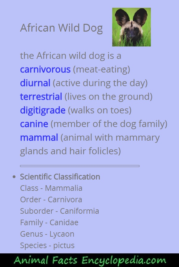 African wild dog science