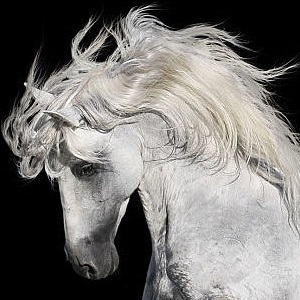 Andalusian horse facts