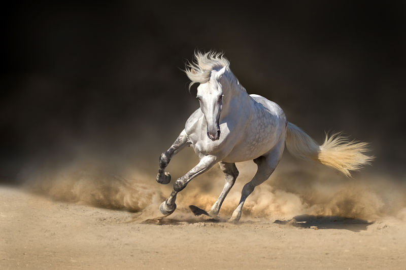 Andalusian horse in the desert