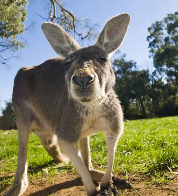 Australian Animals - Animal Facts Encyclopedia