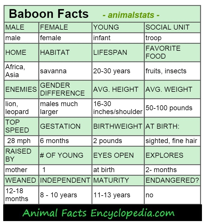 baboon animal stats