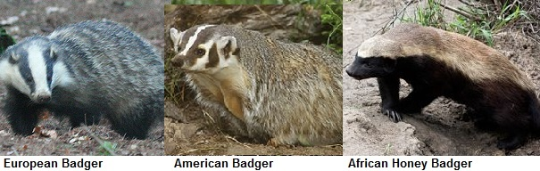 badger comparison