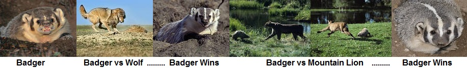 badger wins