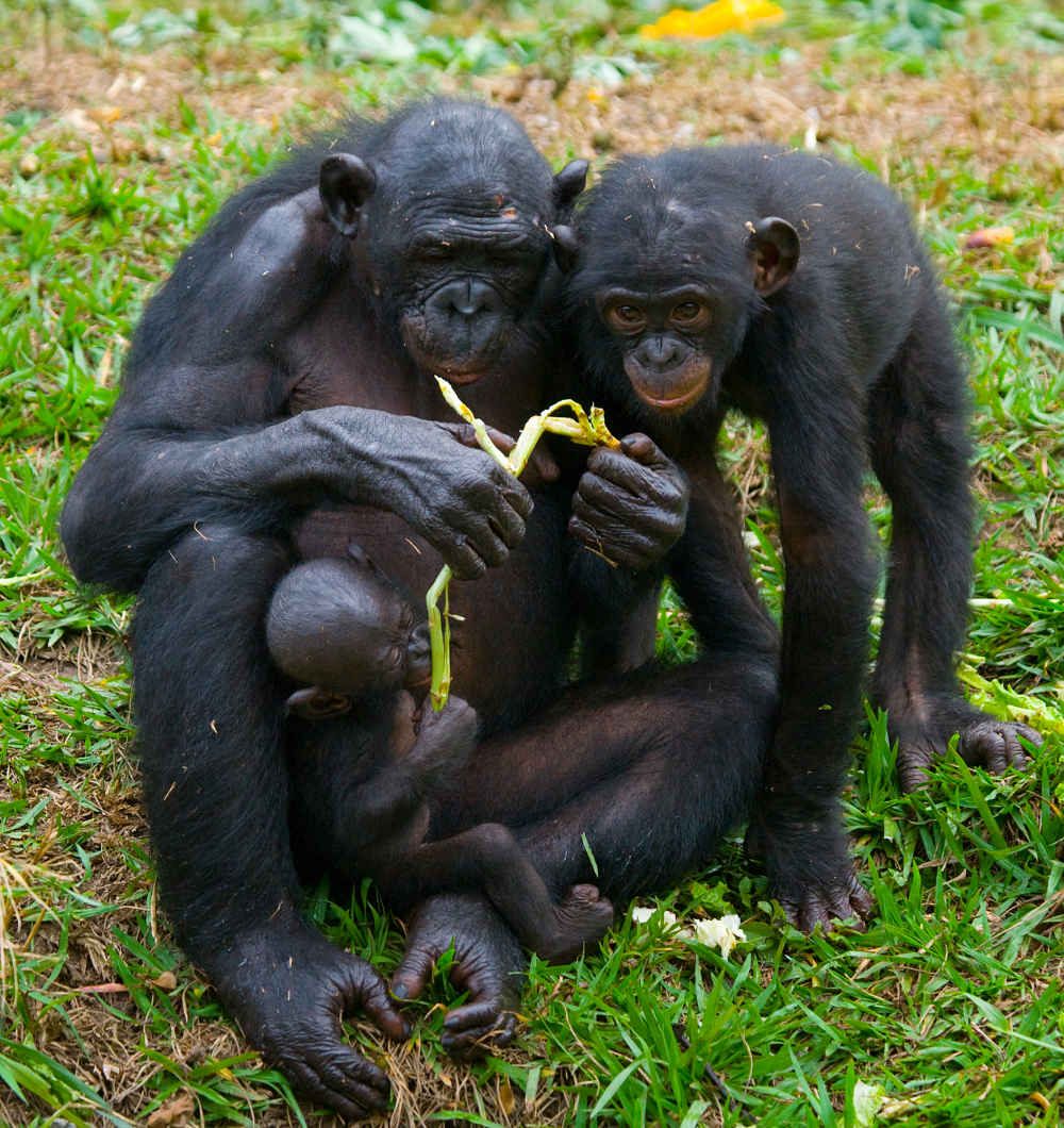 bonobo lesson time