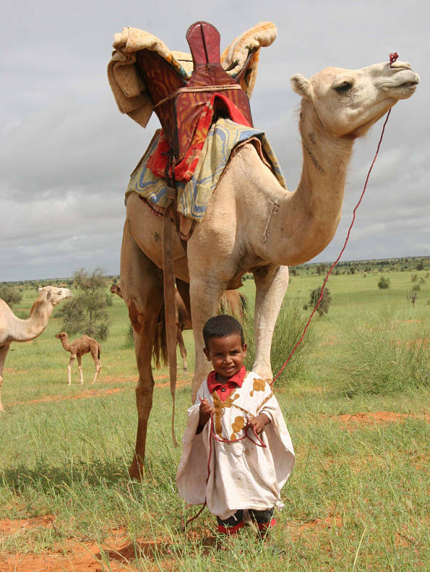 camel with little boy