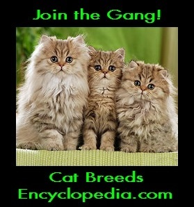 check out some kitties!