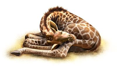 baby giraffe sleeping