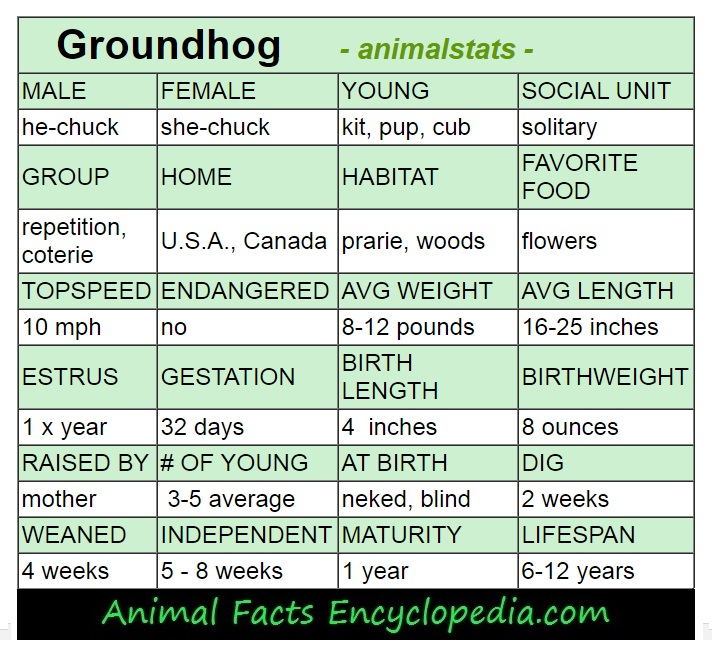 groundhog animal-stats