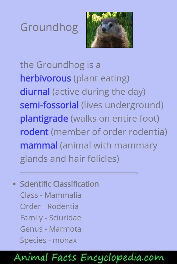 groundhog scientific description