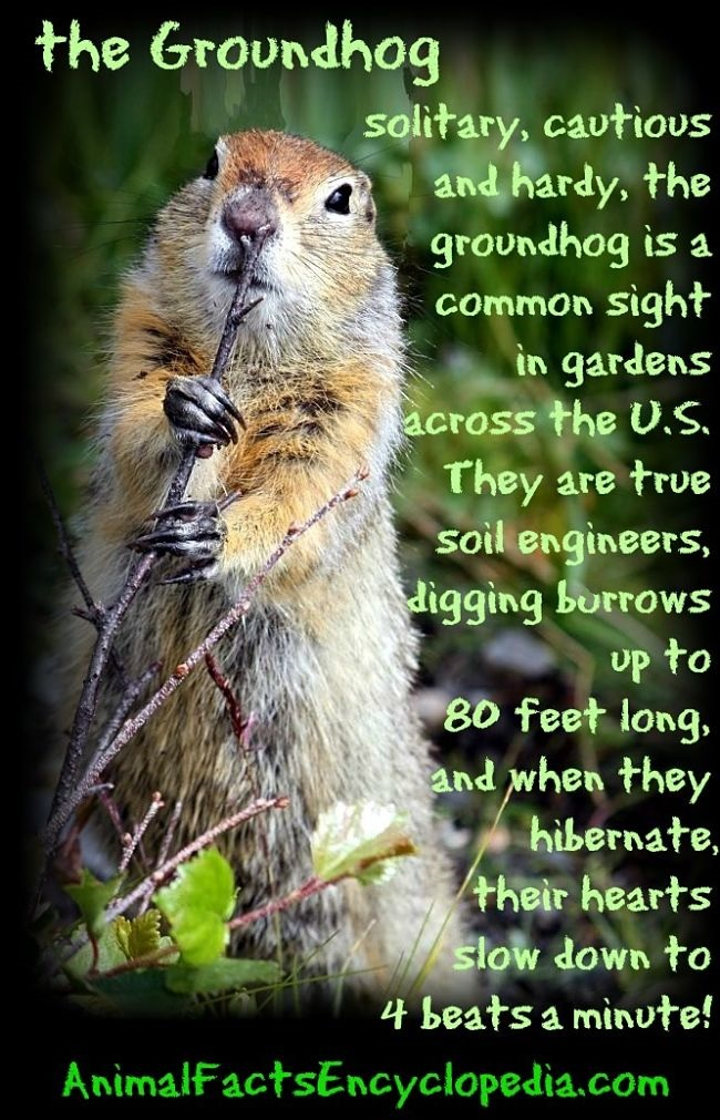 the groundhog story