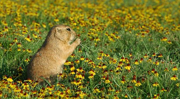 a groundhog with flowers