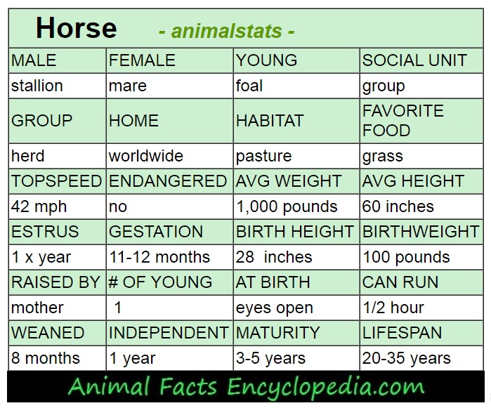 horse animal stats