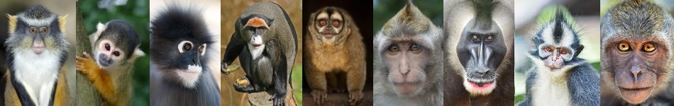 the many faces of monkeys