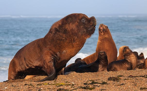 Sea Lion Facts - Animal Facts Encyclopedia
