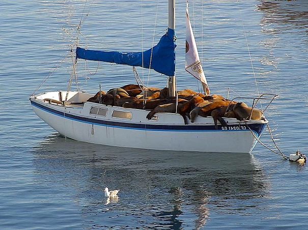 sea lions on boat