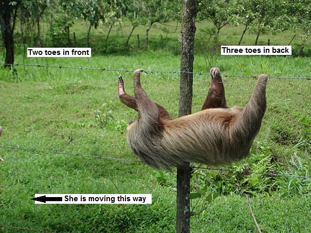 sloth on a wire fence