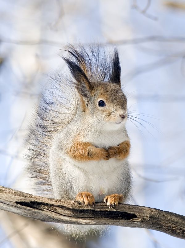 squirrel story